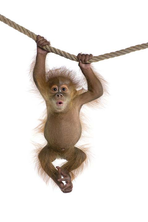 Clive the monkey